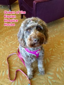 Care Dimensions pet therapy dog Tessie queen of the Kaplan Hospice House